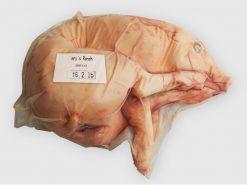 Suckling pig 16.0-16.8 lb